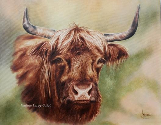 vache écossaise signée