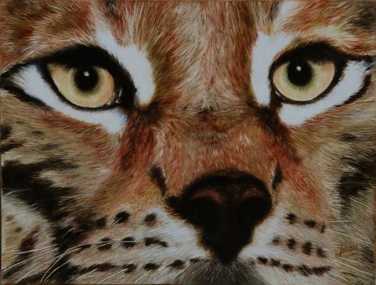 yeux de lynx